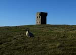 tower and sheep